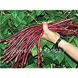 Promoción de venta! 5 PCS mezcló semillas de frijol largo Muy Fácil interés Mini Jardín Oro gancho vegetal orgánico Graden plantas sanas de 10