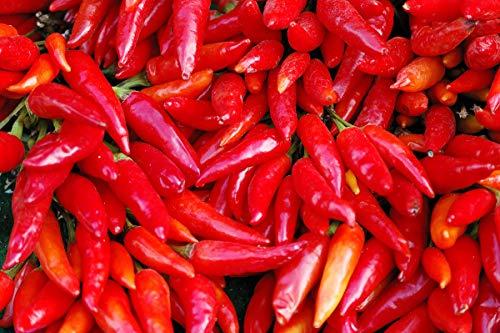 Pimiento jalapeno - rojo, variedad muy picante - 85 semillas