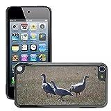 Grand Phone Cases Bild Hart Handy Schwarz Schutz Case Cover Schale Etui // M00141005 Cape Barren Gänse Gänse Tier // Apple ipod Touch 5 5G 5th