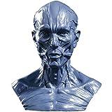 Modèle Humain Crâne Anatomie Muscle Mannequin de Dessin 10cm de Haut Gris