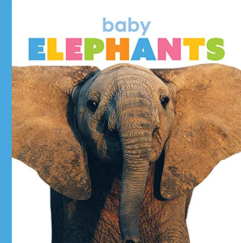 Baby Elephants (Starting Out)