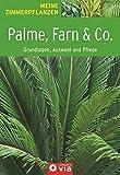 Palme, Farn & Co. - Grundlagen, Auswahl und Pflege: Immergrüner Pflanzenzauber für die Wohnung (Meine Zimmerpflanzen)