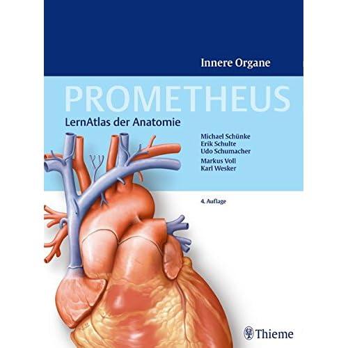 PDF] Prometheus - LernAtlas der Anatomie: Innere Organe KOSTENLOS ...