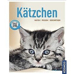 Kätzchen: halten, pflegen, beschäftigen (Mein Tier)