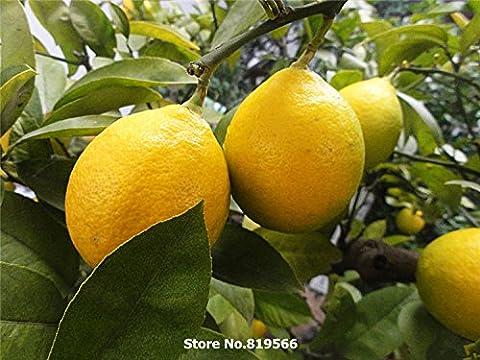 50 pcs / sac de graines de cyprès, arbres de cyprès italien, graines d'arbres bonsaï, plante porte intérieure ou sur la croissance naturelle de la maison jardin plantation
