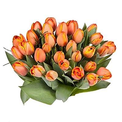 20 orange Tulpen von florito bei Du und dein Garten