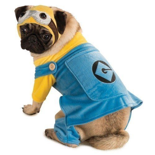 Official Haustier Hund Katze Minion Ich - Einfach Unverbesserlich Halloween Kostüm Kleid Outfit XS-XL - (Kostüme Minion Hund)