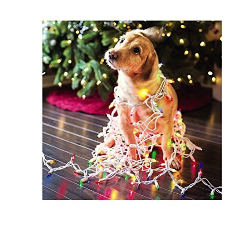 Me To You Up Close Golden Retriever Tangled Up In Christmas Lights Dog Greeting Card