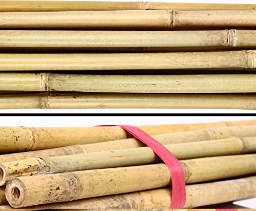 1 Stück Bambusstab Tonkin 200cm natur Durch. 2,0 bis 2,2cm - Bambusrohre Rohr aus Bambus
