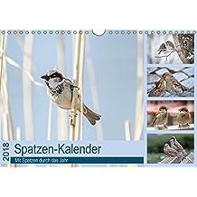 Spatzen-Kalender (Wandkalender 2018 DIN A4 quer): Mit Spatzen durch das Jahr (Monatskalender, 14 Seiten ) (CALVENDO Tiere) [Kalender] [Apr 01, 2017] Drews, Marianne