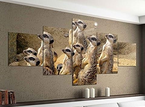 Leinwandbild 5 tlg. 200cmx100cm Erdmännchen Afrika Wüste Surikate Bilder Druck auf Leinwand Bild Kunstdruck mehrteilig Holz 9YA783, 5Tlg 200x100cm:5Tlg 200x100cm