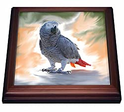 3dRose trv_4030_1 African Grey Parrot-Trivet with Ceramic Tile, 8 x 8, Brown