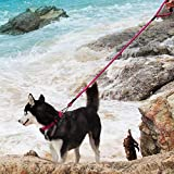 ThinkPet ComfortPro Hundehalsband Leine Set Heavy-Duty Polyester Leine & Verstellbarer Halsband für kleine, mittelgroße Hunde Walking/Hiking, EINWEG Verpackung