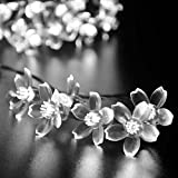 lederTEK Solar Powered Flower Fairy String Lights 21ft 50 LED Waterproof Peach Blossom Christmas Decorative Lamp for Outdoor, Garden, Home, Wedding, Xmas Tree New Year Party (50 LED White)