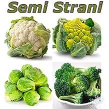 40 Semi In 4 Varietà: Cavolfiore Bianco, Cavolfiore Romanesco, Cavoletto Di Bruxelles, Broccolo Calabrese
