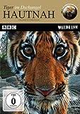 Hautnah - Tiger im Dschungel