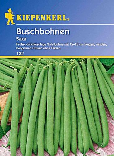 Sperli Gemüsesamen Buschbohnen Saxa, grün