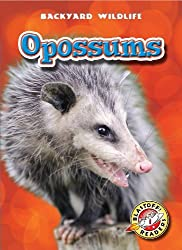 Opossums (Blastoff! Readers: Backyard Wildlife) (Blastoff Readers. Level 1) by Emily K. Green (2011-01-01)
