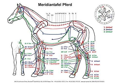 Meridiantafel Pferd: 2 Tafeln in Din A 3
