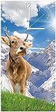 Wallario Design Wanduhr Kuh im Sonnenschein in den Alpen aus Acrylglas, Größe 30 x 60 cm, weiße Zeiger
