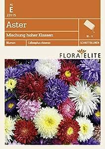 Aster Mischung hoher Klassen von Flora Elite