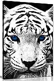 Weiß Tiger blau Augen Tier Bild auf Leinwand print, blau / weiß, A1 76x51 cm (30x20in)