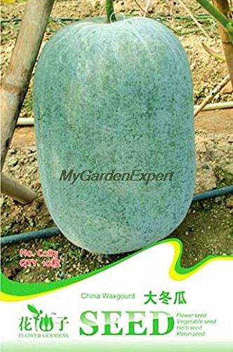 Vente chaude 10pcs Chine Wax Gourd Seeds, Giant Winter Melon Seeds, Graines de légumes, jardin plante grimpante
