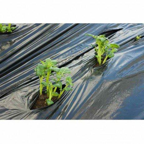 Nature Film de paillage Pommes DE Terre