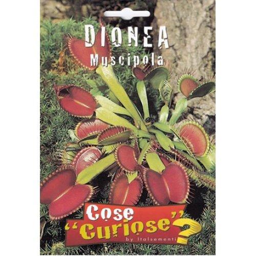 Semi - Dionaea muscipula (venere