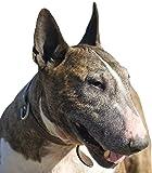 Petsigns Aufkleber Hund Bullterrier - UV-Beständiger Autosticker - Hundekopf, 10 cm