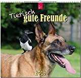 MF-Kalender Tierisch gute Freunde 2019