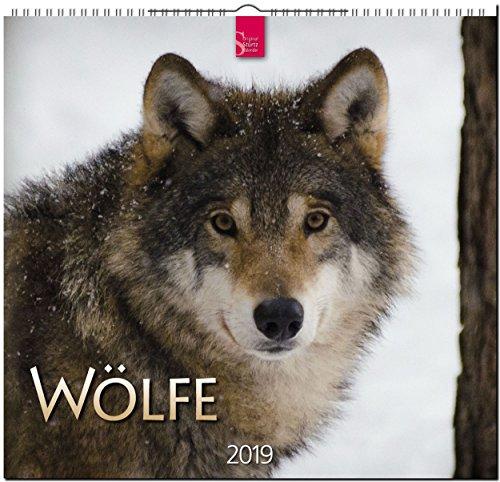 Wölfe 2019: Mittelformat-Kalender