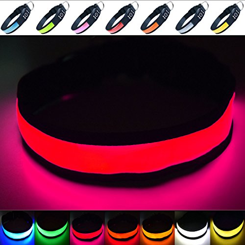 Fun Pets Hundesicherheitshalsband mit ultraheller, wiederaufladbarer LED mit hervorragender Sichtbarkeit und erhöhter Sicherheit Medium (40cm - 50cm / 15.7