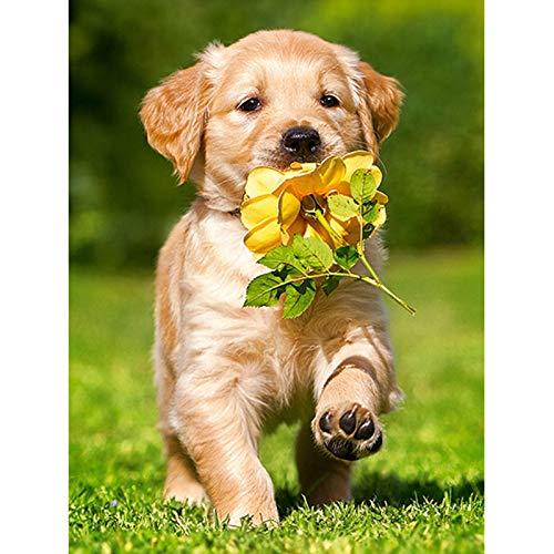 DIY Golden Hairy Hund 5d Diamond Painting Animal Cross Stich Kit Kleine Gold-Haar-Aufkleber Dekorativen Craft Point Drill Diamant Stickerei Stickerei 20x25cm Quadrat Drill