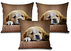 Sleep Nature's Cushion Covers Set of 3 (16x16 inch)