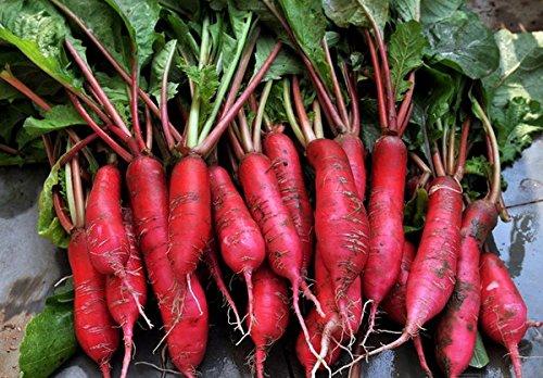 50 Samen Rote Rüben Samen – Raphanus Sativus Linn – Grüne Rübensamen In Original Gemüse Verpackung
