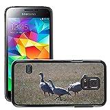 Grand Phone Cases Bild Hart Handy Schwarz Schutz Case Cover Schale Etui // M00141005 Cape Barren Gänse Gänse Tier // Samsung Galaxy S5 MINI SM-G800