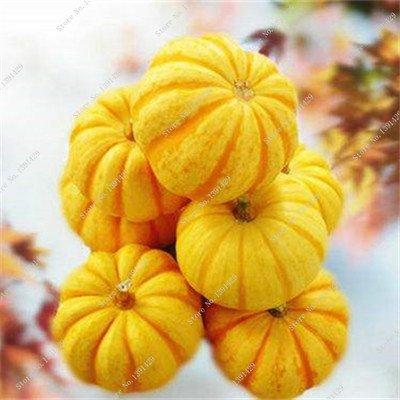 Graines de citrouille rares Cucurbita fil d'or de citrouille non-OGM légumes jardin Bonsai plantes ornementales semences Escalade 10 Pcs / sac 13