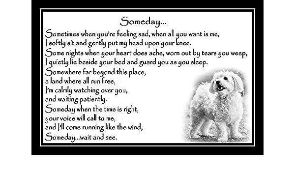 unframed Bichon Frise Pet Dog Bereavement Sympathy Memorial Print Someday