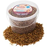 5 Litres Chubby Dried Mealworms with Free Delivery for Wild Birds Only