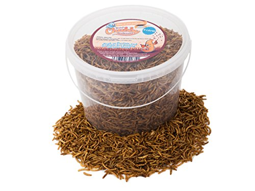5 Litres Chubby Dried Mealworms with Free Delivery for Wild Birds