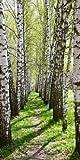 P2974-WPc Wallprint Wandprint Fotodruck 90x180 Bäume&Blätter