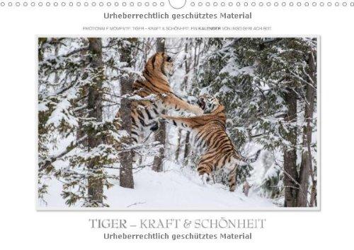 Emotionale Momente: Tiger - Kraft & Schönheit. (Wandkalender 2014 DIN A3 quer): Ingo Gerlach GDT hat die schönsten Bilder vom Tiger für diesen Kalender zusammengestellt. (Monatskalender, 14 Seiten)
