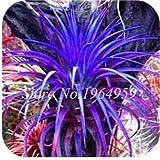 Pinkdose 100 Teile/beutel Bunte Schwingel Gras Bonsai Indoor Garten Festuca Mehrjährige Winterharte Zierpflanzen Einfach Wachsen Bonsai Sementes: 5