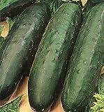 AGROBITS VEGETABLE Marketmore 76 130 FINEST (innen und aussen)