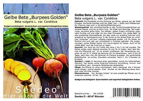 """Seedeo® Gelbe Bete """"Burpees Golden"""" (Beta vulgaris L. var. Conditiva) ca.100 Samen BIO"""
