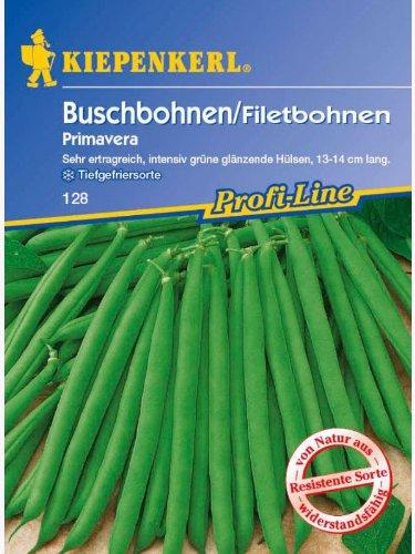 Buschbohnen Filetbohne Primavera resistent