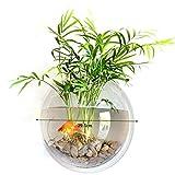 Trasparente Acrilico rotondo fissato al muro appeso Fish Bowl Acquario Serbatoio per pesci dorati e Beta Fish Plant Vaso Home Decoration Pot, 29,5 centimetri di diametro