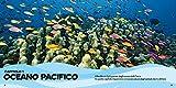 Il-primo-grande-libro-degli-oceani-Ediz-a-colori