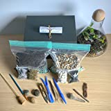 ConcreteLab&Co Terrarium Kit mit Schritt für Schritt Anleitung, inkl. Boden, anthrazit, pebbles, Sphagnum-Moos, Schiefer, sand, Treibholz und Pinsel verpackt in London, Large